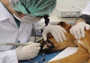 veteriner-hekim